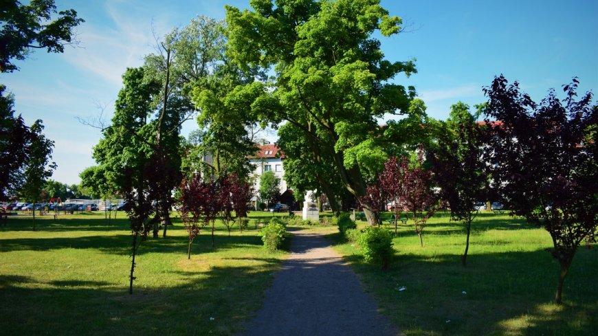 Zdjęcie przedstawia nasadzenia w Parku Lwa